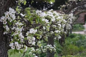 Gorgeous blossom